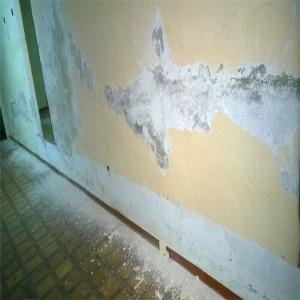 Humedad por capilaridad en pared 3